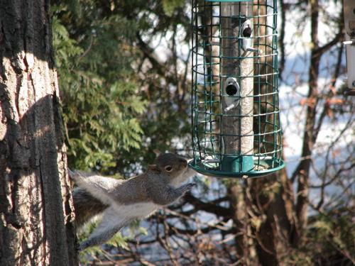 squirrel-attempt.jpg