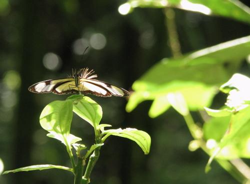 butterfly-hair.jpg