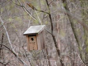 Birdhouse at the Celery Farm