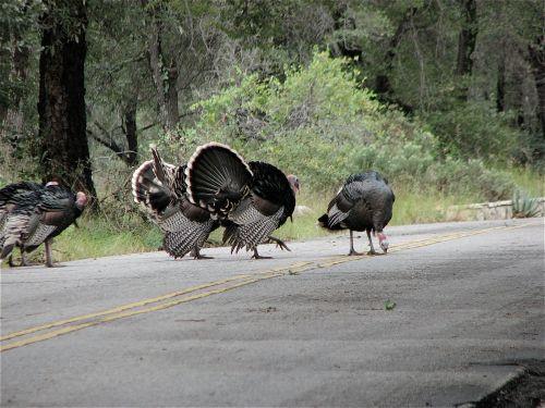 az-turkey