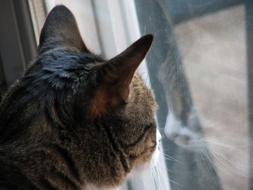 cat-window
