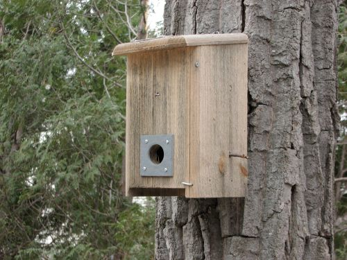 chickadee-box