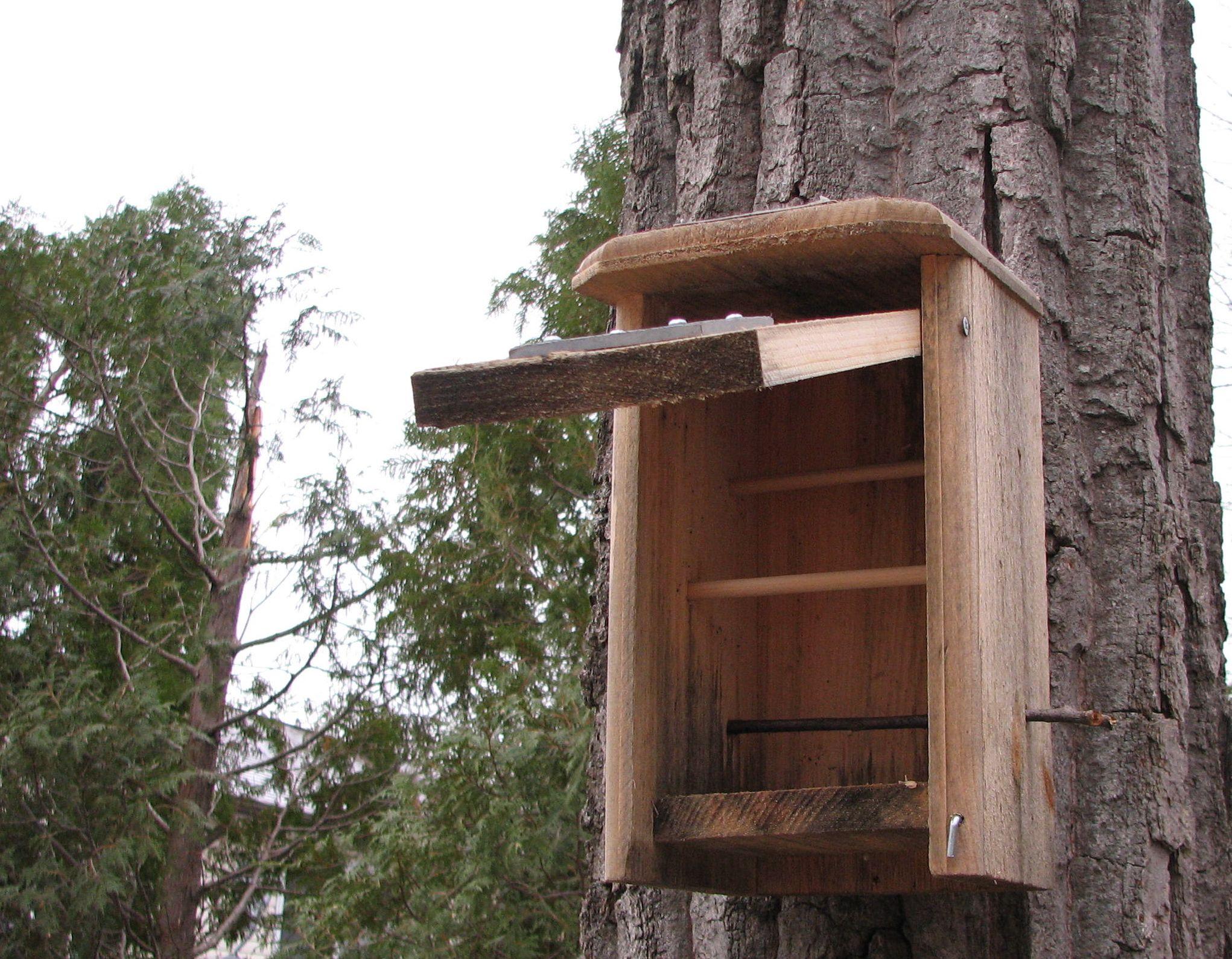Winter Chickadee Accomodations Behind The Bins