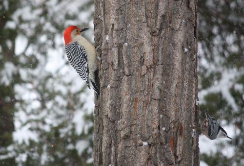 feeder-birds-in-snow