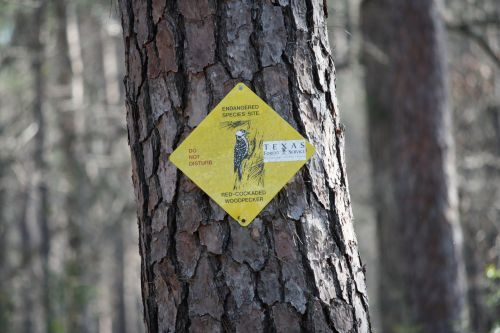 red-cockaded-woodpecker-sign