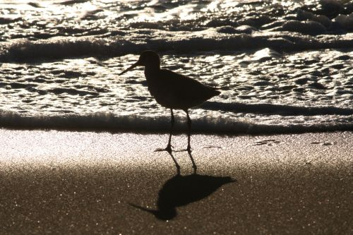 willet-silhouette